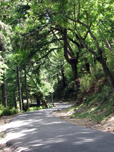 The off-beaten tracks in Kasauli - perfect for exploration!