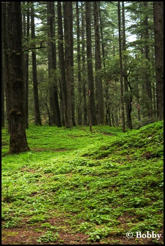 A small, beautiful, green hamlet in Lansdowne.