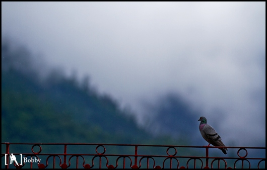 Nature's Glory - a bird watches in awe at the mountains and the clouds that surround it.